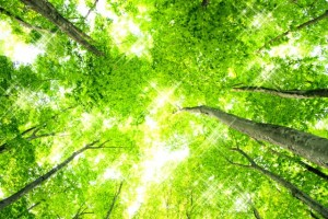森林 (1)